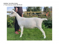 Goatling AOV 2nd Place Dalestone Dahlia-page-001