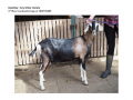 Goatling AOV 3rd Place Awekoola Papaver-page-001
