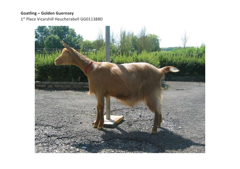 Goatling GG 1st Place Vicarshill Heucherabell