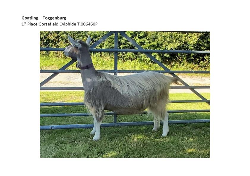 Goatling T 1st Place Gorsefield Cylphide