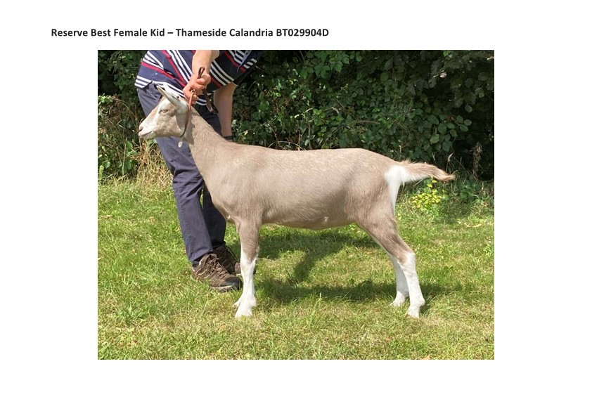 Reserve Best Female Kid - Thameside Calandria