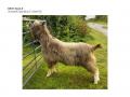 Best Male - Gorsefield Myshkin-page-001