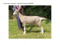Reserve Best Female Kid - Thameside Calandria