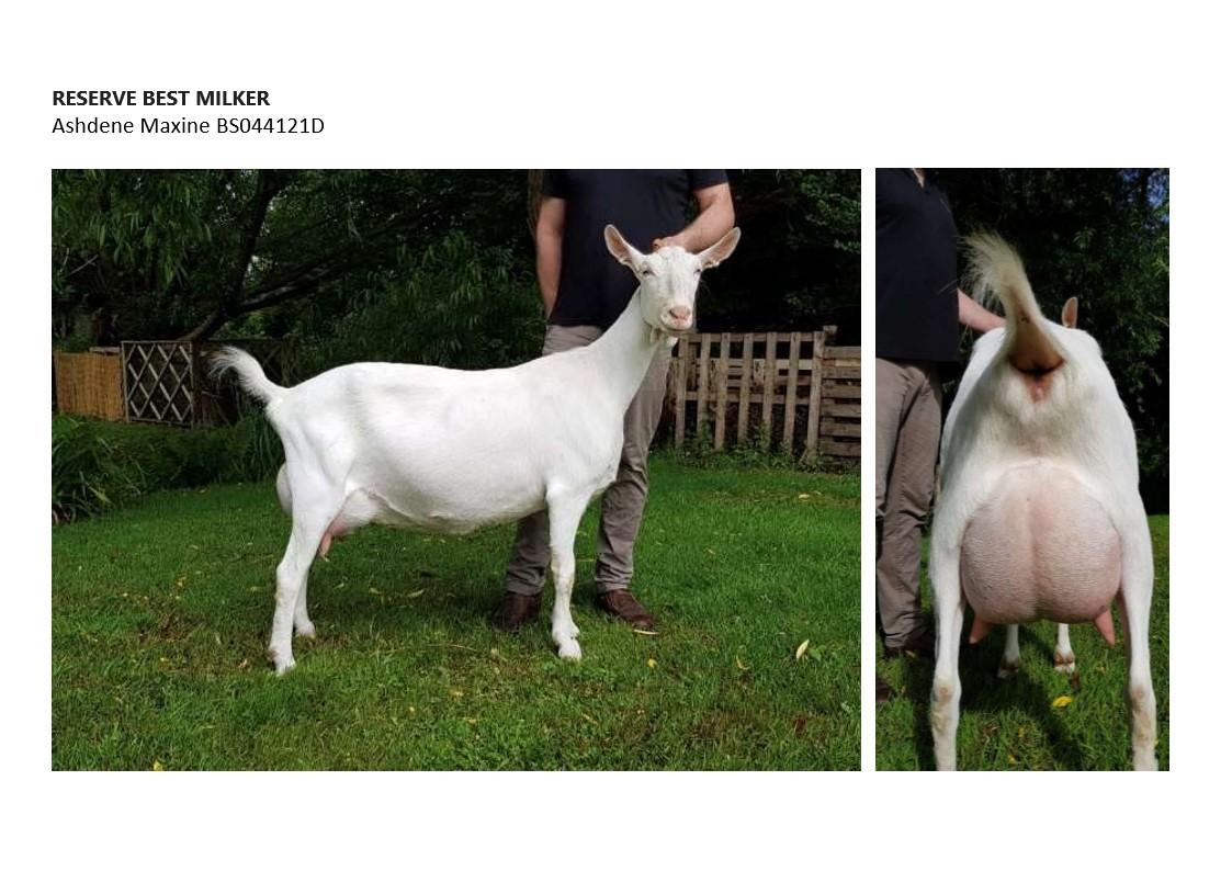 Reserve Best Milker Ashdene Maxine_1