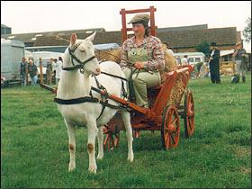 Harness - British Goat Society