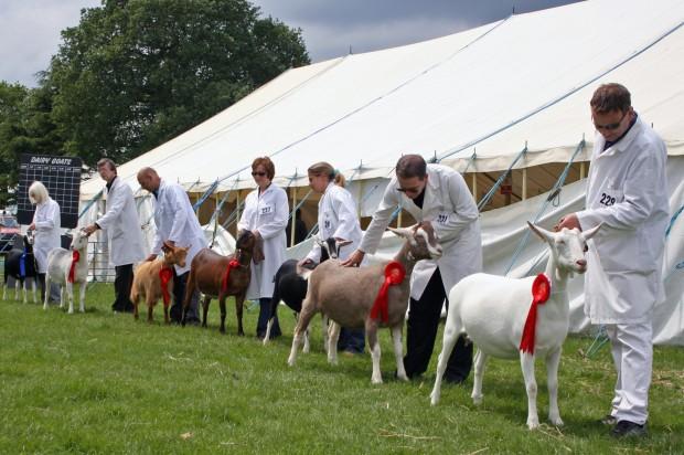 2008 Best Goatlings